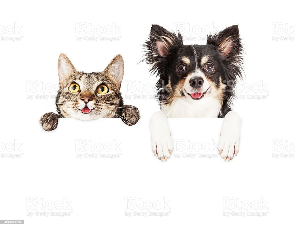 Happy Dog and Cat Over White Banner stock photo