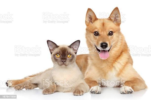 Happy dog and cat together picture id167647858?b=1&k=6&m=167647858&s=612x612&h=tbeoneqgzcnsbjpaavvd3ipvxyaqohmqcoy ajhwmvw=