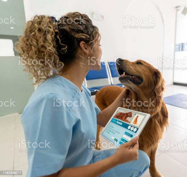 Happy dog arriving at the vet picture id1162639217?b=1&k=6&m=1162639217&s=612x612&h=xvf3vwee7msfissctbqkqdhtmbnnaa7zb2cqq3iabqw=