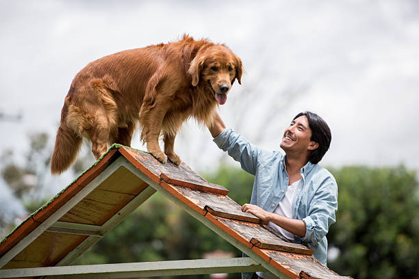 Happy dog at an obstacle course stock photo