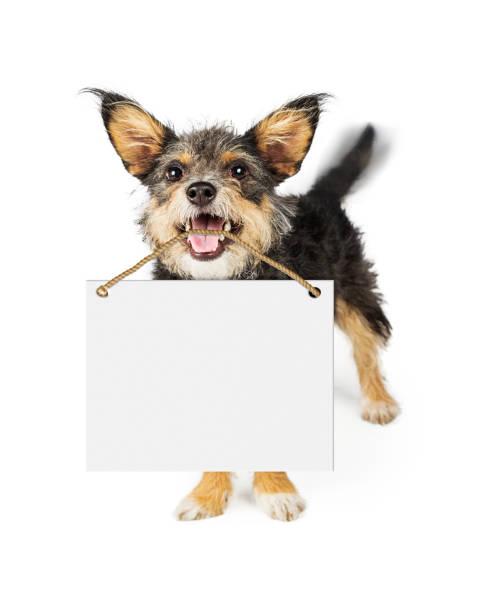 Happy dog carrying blank sign picture id691302522?b=1&k=6&m=691302522&s=612x612&w=0&h=iynr1g pfjyaxav5cfcpisa9e0czjeshhjnbaurauf8=