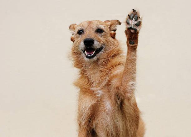 Happy dog doing high five stock photo