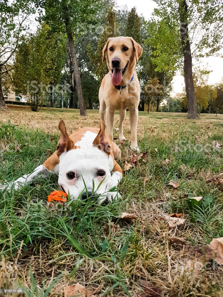 Happy dog friends stock photo