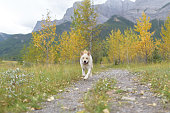 Happy dog grinning on an outdoor adventure