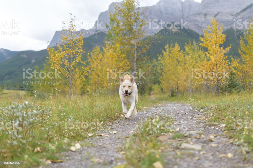Happy dog grinning on an outdoor adventure stock photo