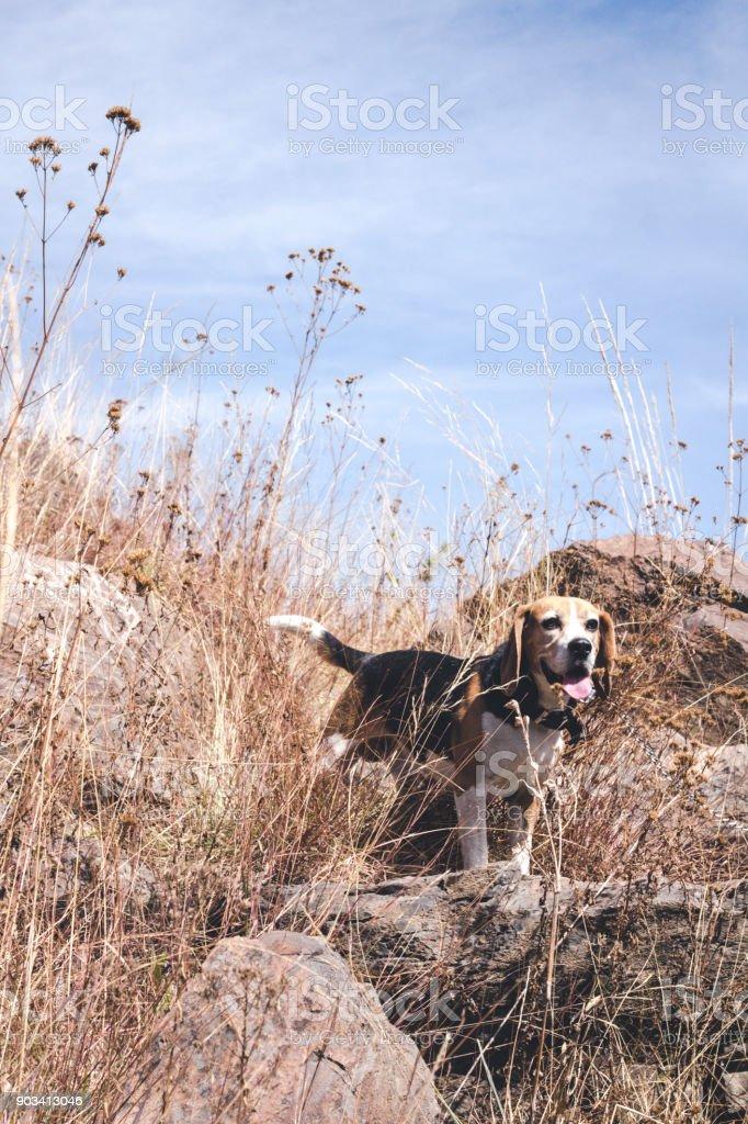 Happy dog having fun in the nature unleash stock photo