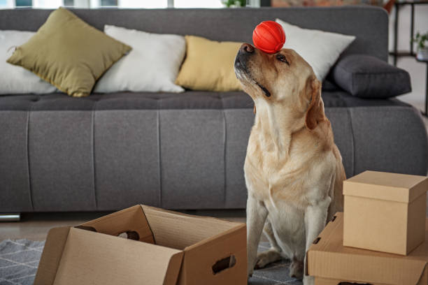 Happy dog having fun with rubbish toy picture id870589080?b=1&k=6&m=870589080&s=612x612&w=0&h=cauhnuzwsweyvysgdiguq7gal oonsvyf qmzmxxbve=
