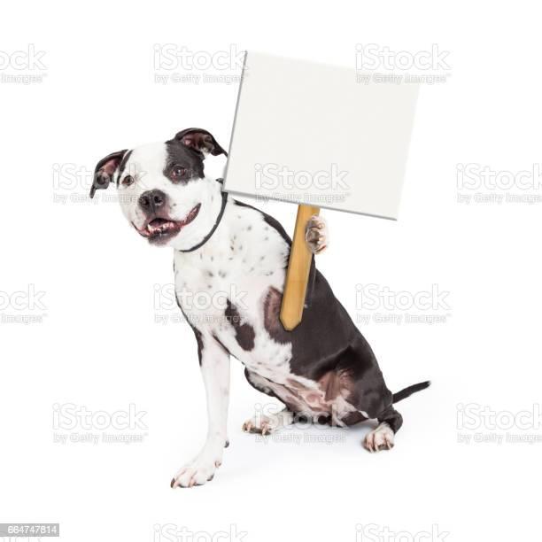 Happy dog holding up blank sign post picture id664747814?b=1&k=6&m=664747814&s=612x612&h=j jenbgodsgue6hadgeonomxgmtjj4nd70khpg48 gk=