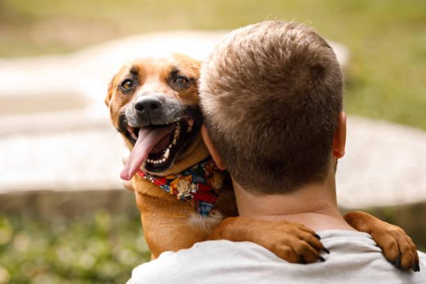Happy dog hugging a man at dog hotel stock photo