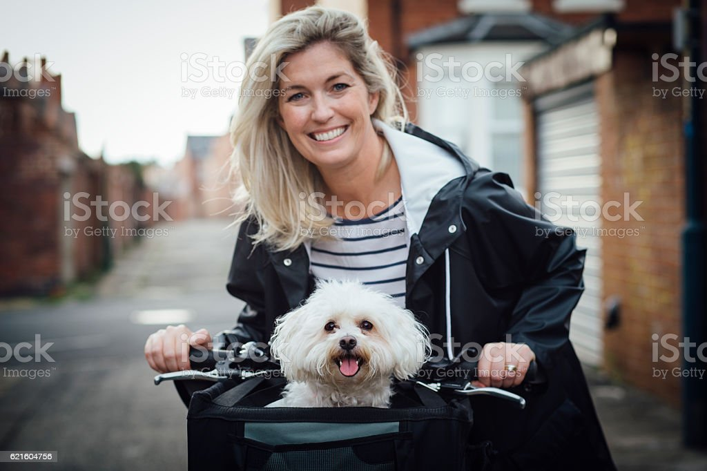 Happy Dog in a Bicycle Basket stock photo