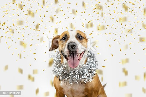 istock Happy dog in Christmas tinsel and confetti background. 1079193658