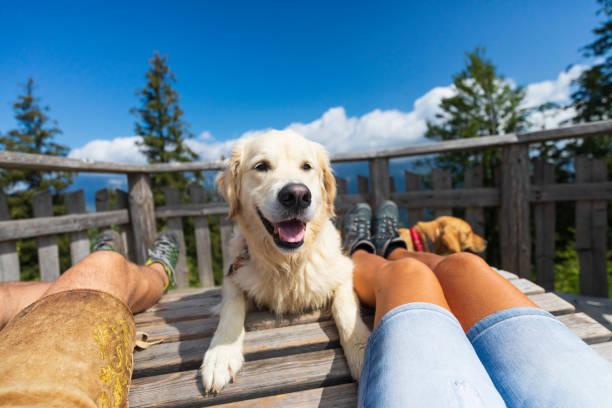 Glücklicher Hund in Urlaub – Foto