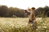 Happy dog in the fields