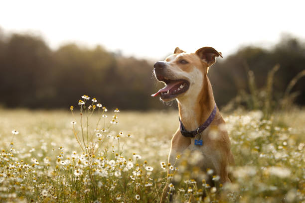 happy dog in the fields - dog stock pictures, royalty-free photos & images