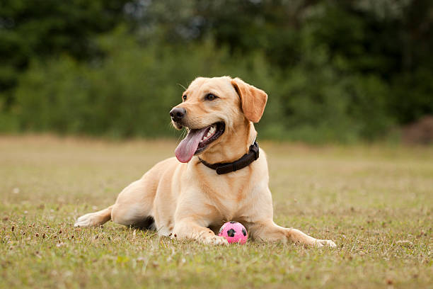 Happy dog in the park. stock photo