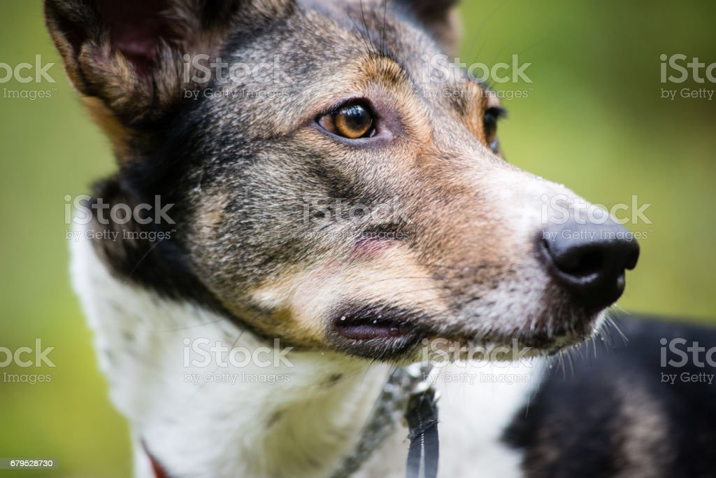 happy dog is looking for direction in forest royalty-free stock photo