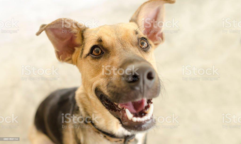 Glücklich Hund isoliert – Foto