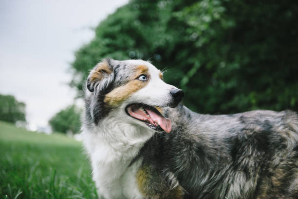 Glücklicher Hund suchen auf Seite – Foto