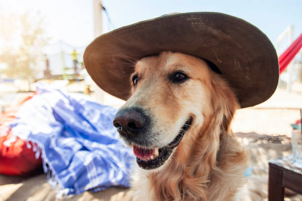 Happy Dog On the beach stock photo