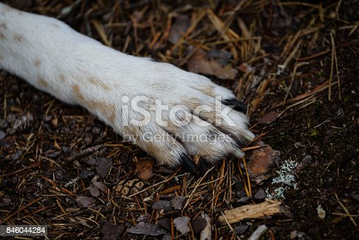 happy dog paws in forest dirt road