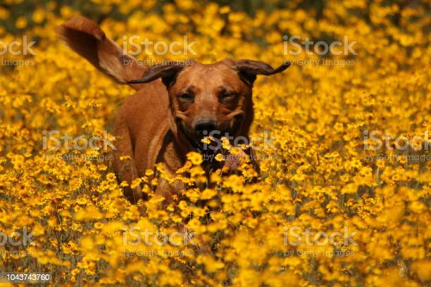 Happy Dog Stock Photo - Download Image Now