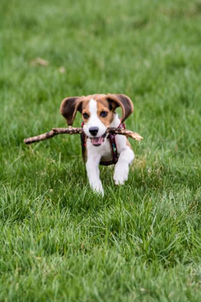 Happy dog picture id1093717806?b=1&k=6&m=1093717806&s=612x612&w=0&h=61pil3zrkbuvckktu 1qmacnfwxs3djejz9mrndwjii=