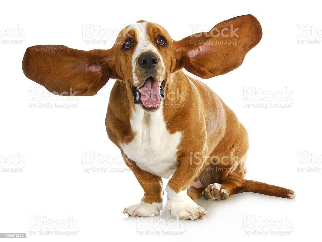 Szczęśliwy Pies – zdjęcie