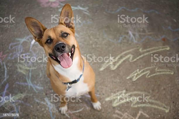 Happy dog picture id157473075?b=1&k=6&m=157473075&s=612x612&h=nugiavc49yhljvmziyzjhrbcnca3uf80ozms8mr8okk=