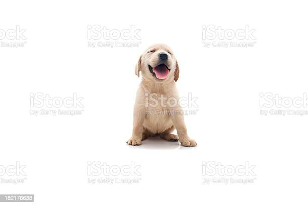 Happy dog picture id182176638?b=1&k=6&m=182176638&s=612x612&h=wnhgbwtm9ryxkhfuwfobobgdod1td7lafqzjjshxi4o=