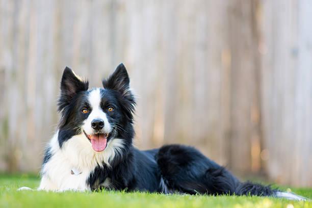 Perro feliz - foto de stock
