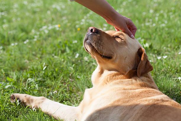 Happy dog picture id545274718?b=1&k=6&m=545274718&s=612x612&w=0&h=yio2fu2rmhj1kiyle20qbs ygaupkwopqf6asvd r5s=