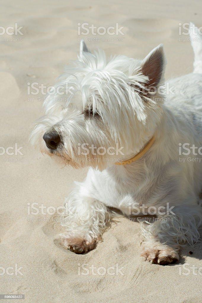 Happy dog royalty-free stock photo
