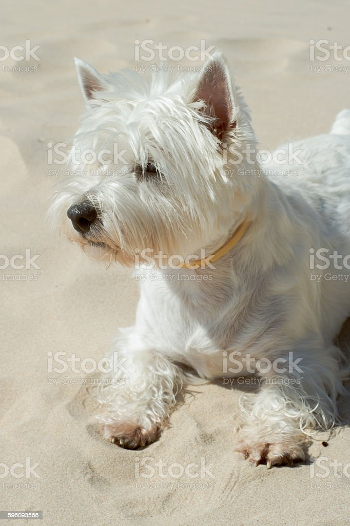 Happy dog royalty-free stock photo