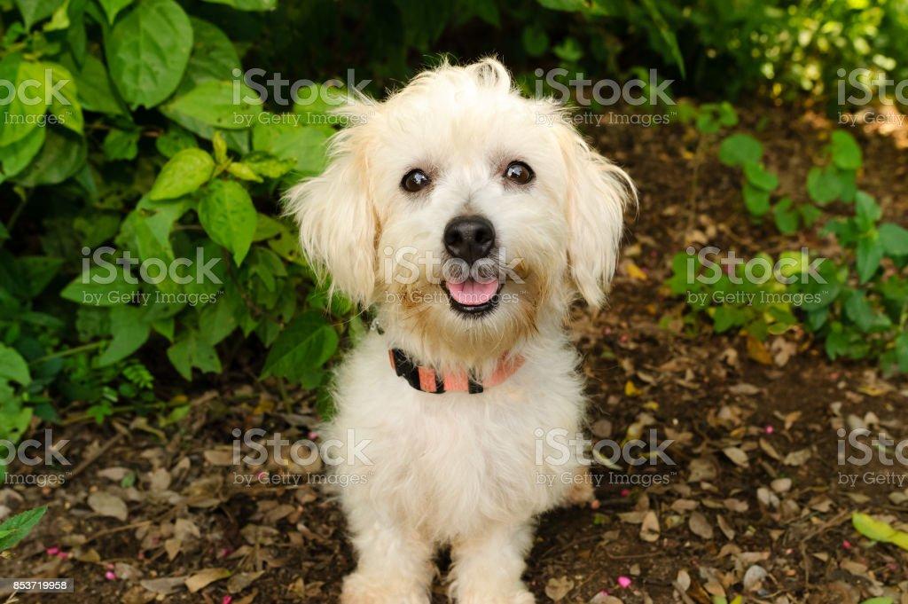 Happy Dog – Foto