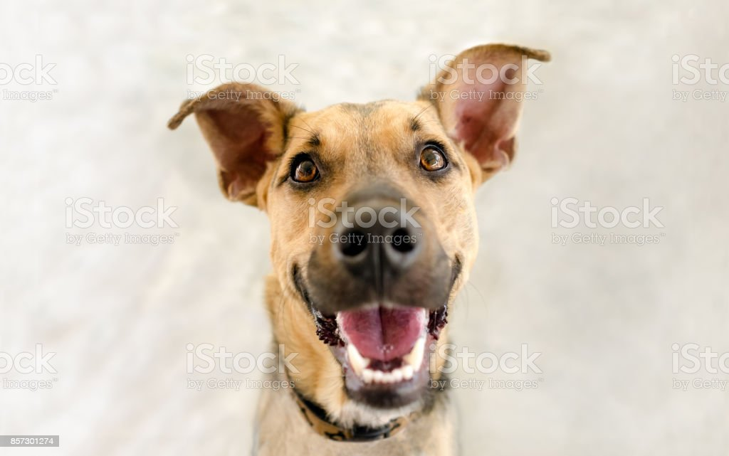 Happy Dog – Foto