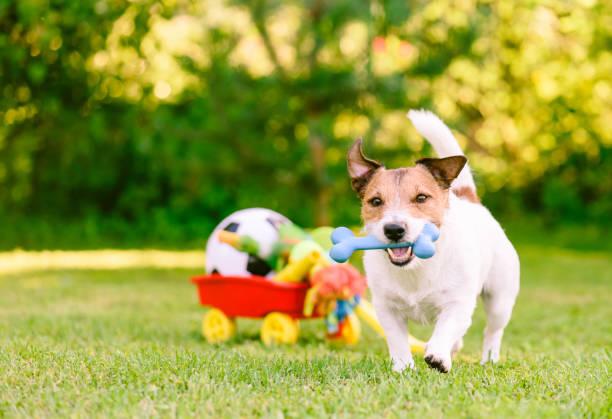 Happy dog playing outdoor walking with rubber bone next to cart full picture id1051255206?b=1&k=6&m=1051255206&s=612x612&w=0&h=gcanppvm52k7q1yj4gvzlebg6ef1 vlihowa6mmwtpw=