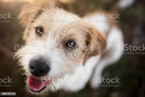 Happy dog playing picture id959752154?b=1&k=6&m=959752154&s=612x612&h=no2v68vdkcemeczsbscnu6ef10fyyiduwzjn dt3uki=