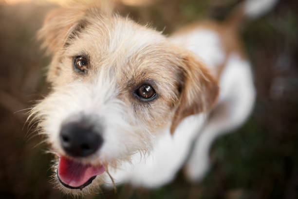 Happy dog playing A happy mutt dog portrait at park mixed breed dog stock pictures, royalty-free photos & images