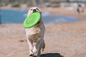 Happy dog playing with Frisbee at the Beach