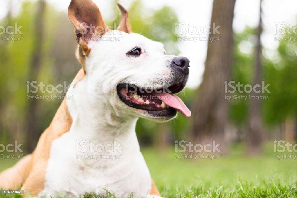 Happy Dog Portrait stock photo