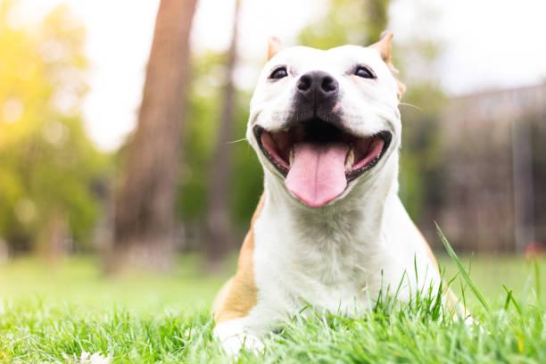 Happy Dog Portrait Happy Dog Portrait, springtime animal saliva stock pictures, royalty-free photos & images