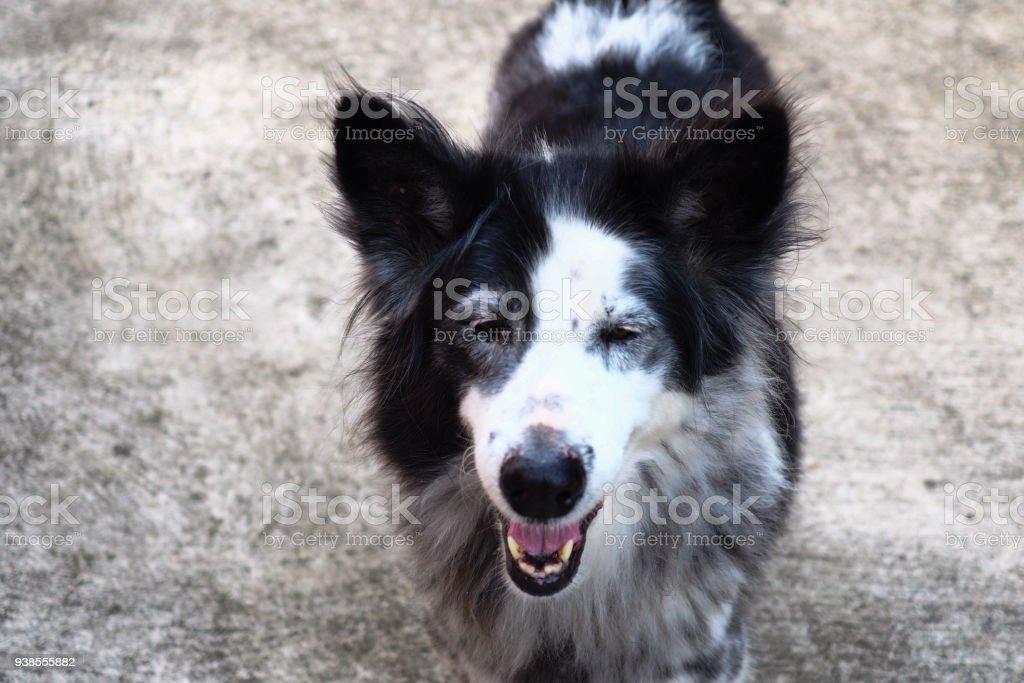 Happy Dog Portrait - Smiling dog - Local dog - Thailand stock photo