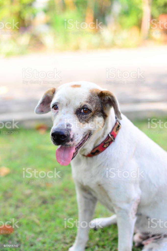 Happy Dog Portrait - Smiling dog stock photo