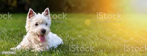 Happy dog puppy picture id628925952?b=1&k=6&m=628925952&s=612x612&h=bz6zeg31tbu  s a e p hv3i4qosso16fd xn6pnr4=