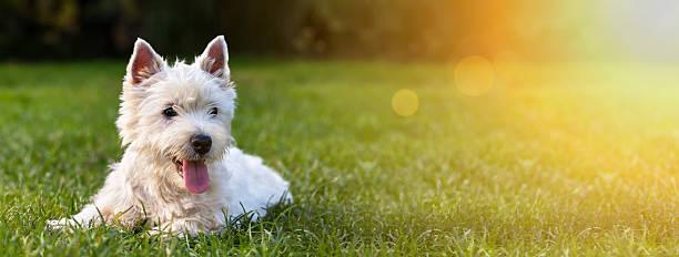 Happy dog puppy picture id628925952?b=1&k=6&m=628925952&s=612x612&w=0&h=qoqjbhwjfd8stunevdzi1hps6oj2e58hrj tbidf6pu=