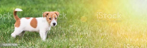 Happy dog puppy web banner with copy space picture id1020567628?b=1&k=6&m=1020567628&s=612x612&h=tve7bmknfoljoqe7czmvltcavu1 p4nge27tnu0u7ve=