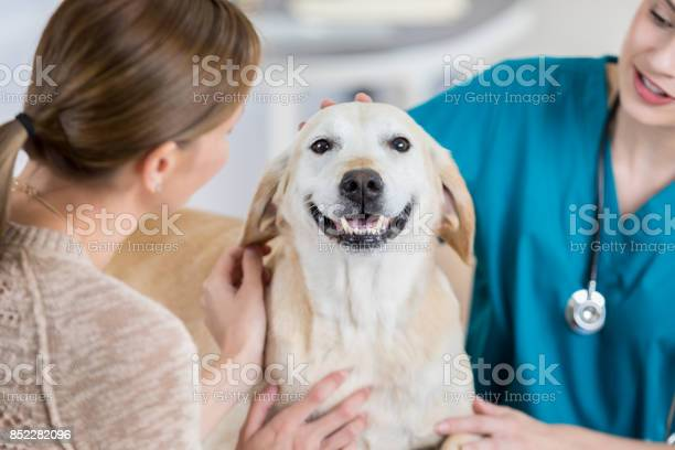 Happy dog receives a good report from veterinarian picture id852282096?b=1&k=6&m=852282096&s=612x612&h=ijpmpi6mmzn2rxmsdw0fjown ongoholde6u5pl 27s=