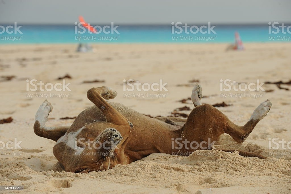 Happy dog rolling in sand stock photo