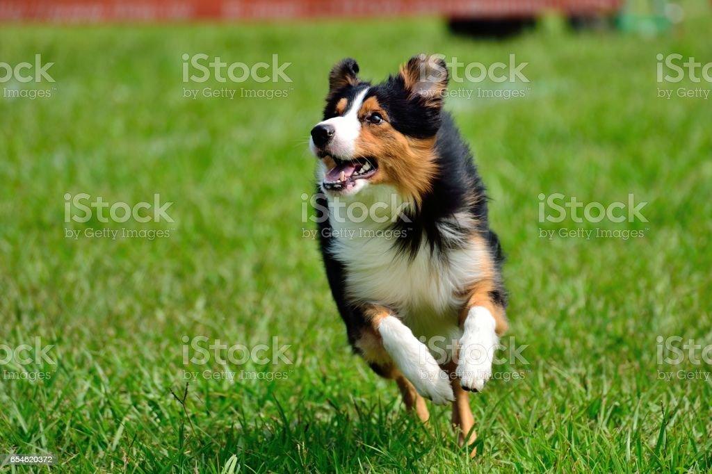 Happy dog, running and having fun stock photo