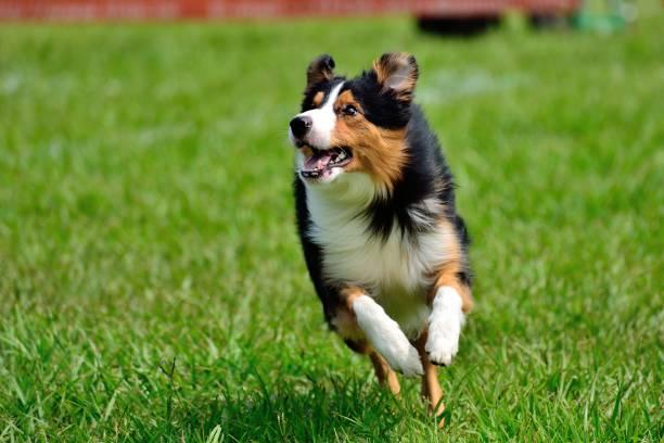 Perro feliz, correr y divertirse - foto de stock